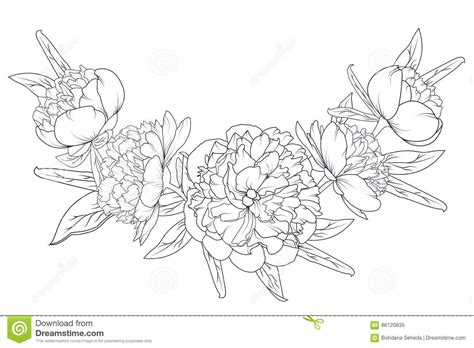 peony rose laurel foliage garland black white stock vector
