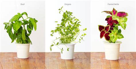 interior plants product of the week click grow smart garden