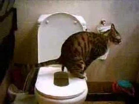 cat pooping in bathtub cat training toilet large 1 youtube
