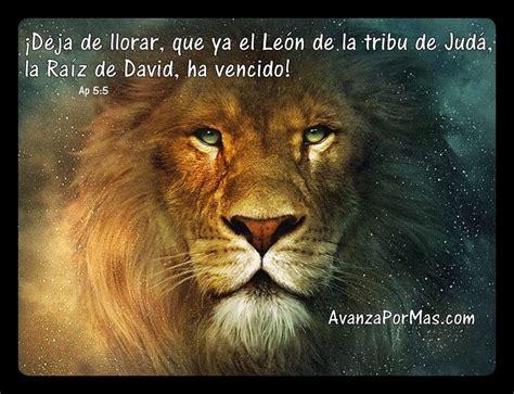 imagenes de leones con frases imagui el le 243 n ha vencido avanza por m 225 s
