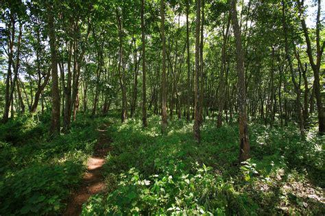 Potensi Dan Rencana Pengelolaan Hutan Kota Sangatta potensi lebak lindawati lebak page 3
