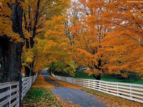 vibrant raze  day  fall