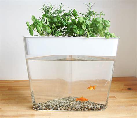 ecofarm  stylish aquarium  fish waste  grow