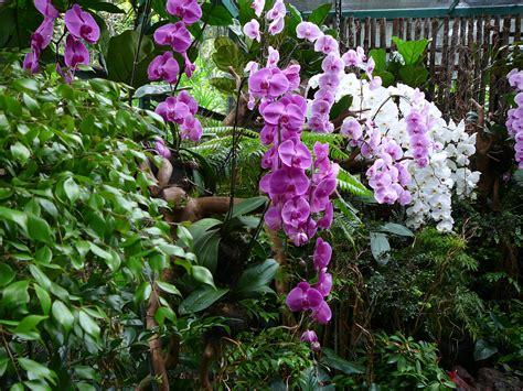orchideen garten australien die f 252 nfte sylvester in sydney unter der