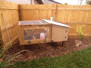 backyard quail coop beautiful backyard quail coop quails pinterest