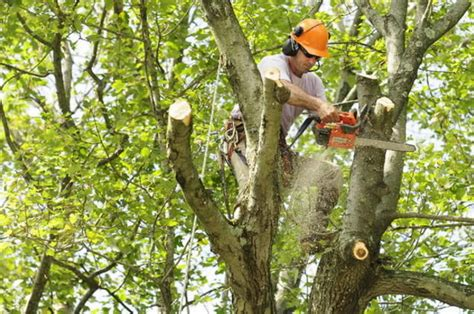 tree trimming miosha issues fatality hazard alert concerning tree