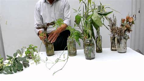 plantas en agua interior como cuidar las plantas de agua youtube