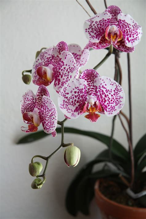 top 28 orchids after blooming flowers retireediary what to do after your orchids are
