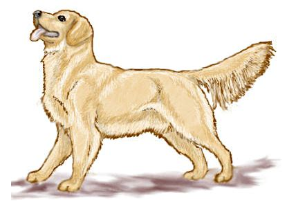golden retriever clip golden retriever clipart
