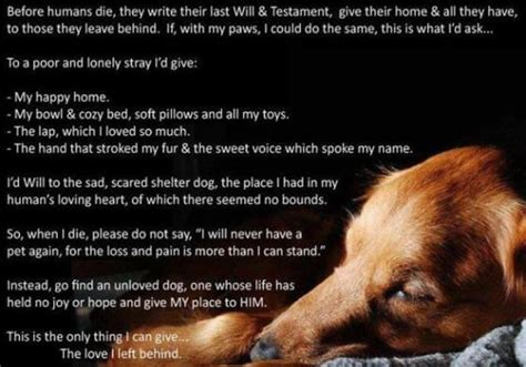 poems about dogs dying 45 best images about remembrants on dogs my and letter from