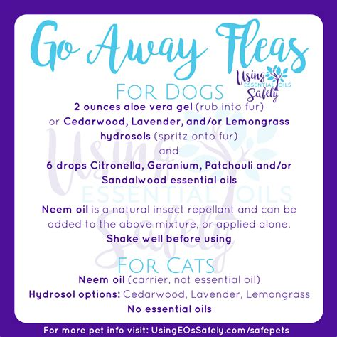 essential oils for fleas on dogs safely using essential oils with pets using essential oils safely