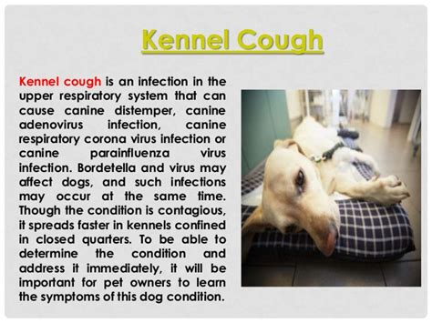 what is kennel cough in dogs what is kennel cough