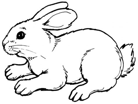Realistic Bunny Coloring Page | rabbits coloring pages realistic realistic coloring pages