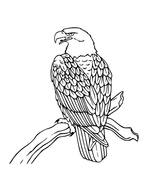Bald Eagle Coloring Pages Free | free printable bald eagle coloring pages for kids