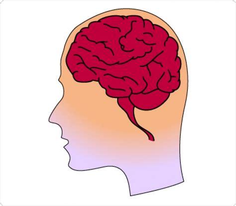 brain clipart human brain clipart 101 clip