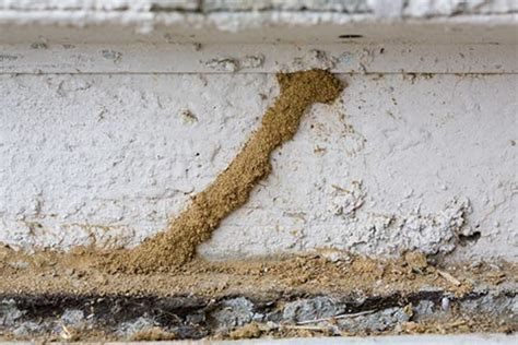 termite inspection santa barbara ca termite exterminators