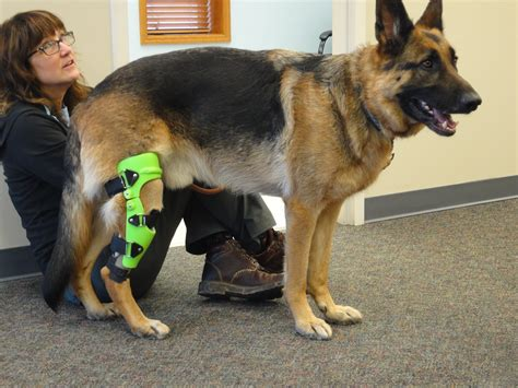 acl brace for dogs acl leg brace for dogs images
