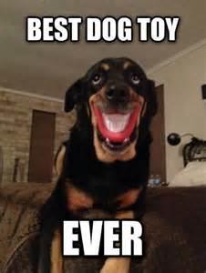Best Ever Memes - best dog toy ever dog meme jokes memes pictures