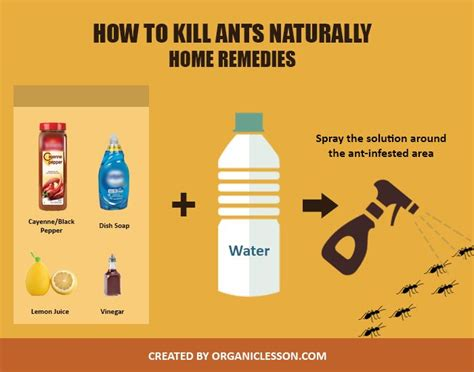 rid  ants permanently  home remedies