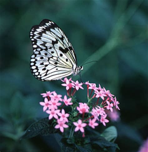 Bunga Anggrek Hidup Standard fransiscat s
