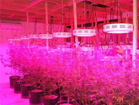 Best Led Grow Lights High Times by Best Led Grow Lights Reviews For Cannabis 2017 Top Led