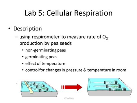 cellular respiration lab bench lab 5 cellular respiration 6 lab bench cellular