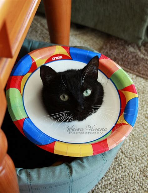 cone alternative 69 best images about cone of shame on cats laughing and photos