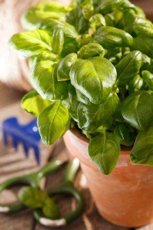 indoor garden   cheap fruit flies