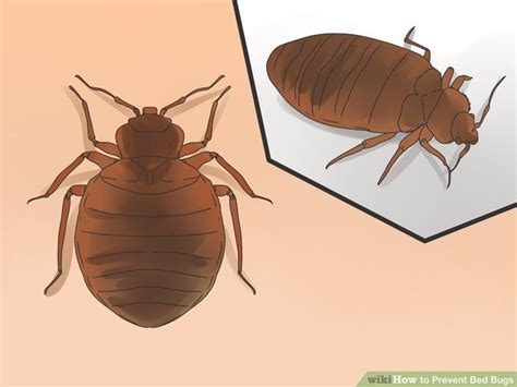 does clorox kill bed bugs pin by pest control on bed bugs pinterest