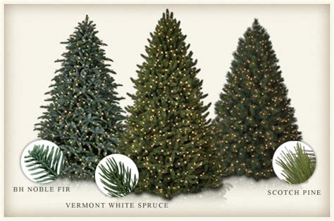 christmas tree types comparison differences between evergreen trees spruce vs pine vs fir balsam hill artificial