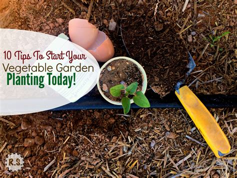 when to start planting a vegetable garden vegetable garden planting 10 must haves
