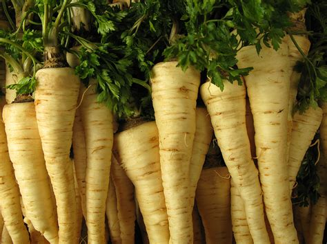 Parsley Root: Kitchen Basics   Harvest to Table