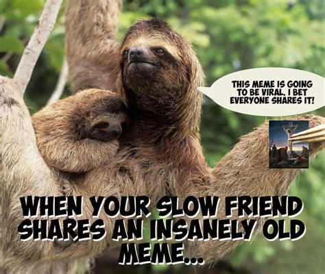 Dirty Sloth Meme - funny dirty sloth memes www pixshark com images