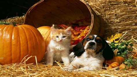 halloween themes with dogs 20 pumpkin wallpapers