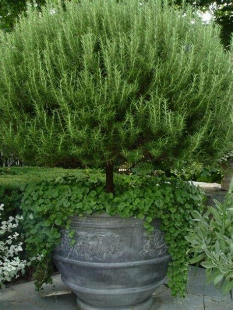 Furlow Gatewood by Rosemary Bush Backyard Garden Ideas Pinterest