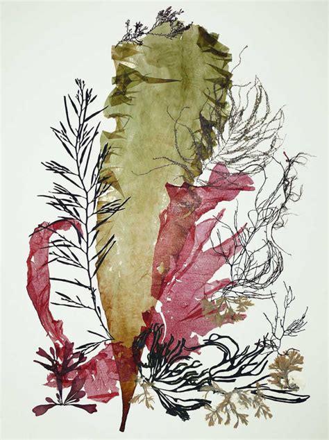 seaweed art pressed seaweeds sea weed pressings natural