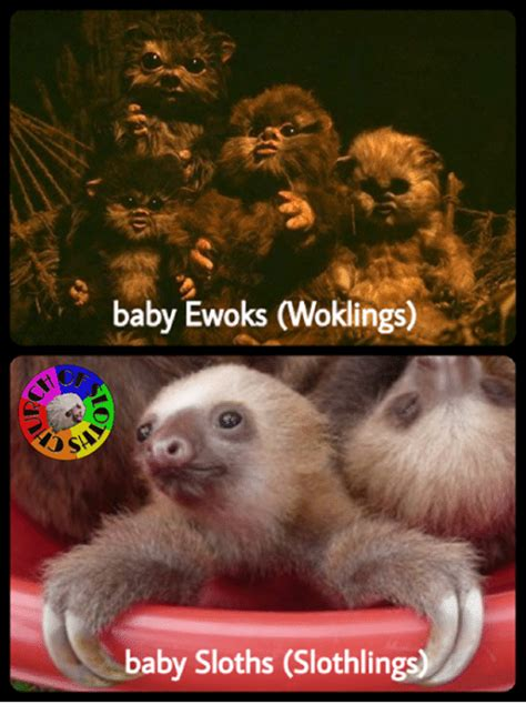 Baby Sloth Meme - 25 best memes about baby sloths baby sloths memes