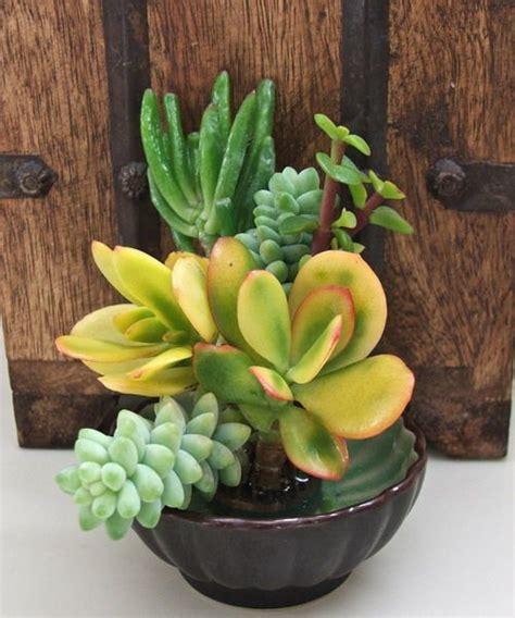 Succulent Dish Garden Ideas 35 Indoor And Outdoor Succulent Garden Ideas Shelterness Succulents And Cacti Pinterest