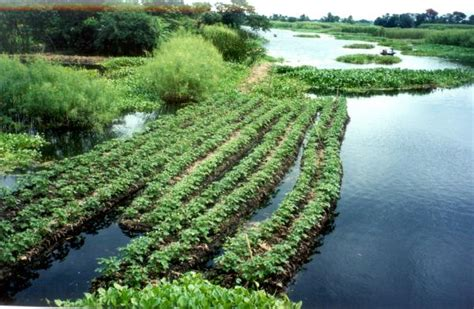 floating vegetable garden the history and of the aztecs floating gardens