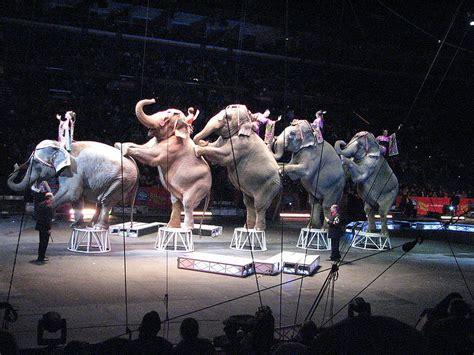 Circus Elephant Rage Mysyahmir The Elephants Parade