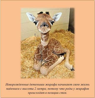lada per neonati barzellette russe marzo 2012