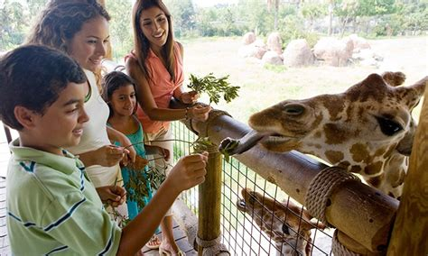 emirates zoo ticket offers emirates park resort zoo in groupon