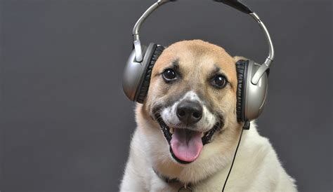 Dogs On by Do Animals Like Vetdepot