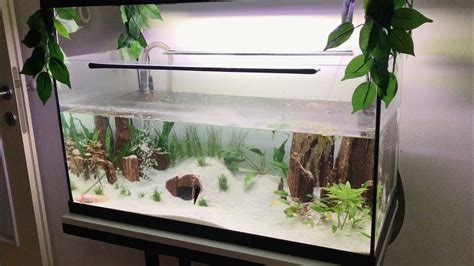 axolotl cool cute aquarium mexican salamander youtube