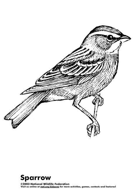 coloring page of house sparrow coloring activity pages 06 03 11