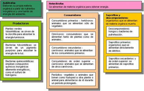 las cadenas migratorias definicion ecolog 237 a y ecosistema monografias