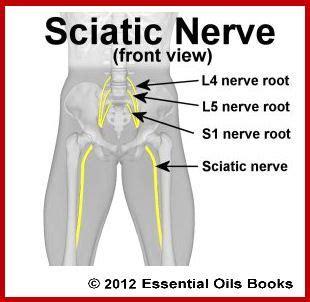 sciatic nerve diagram sciatic nerve if it s not it got to hurt for