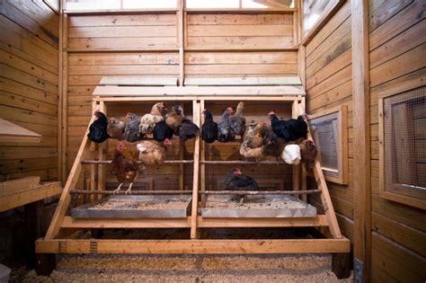 interior layout of a chicken coop alabama chicken coop