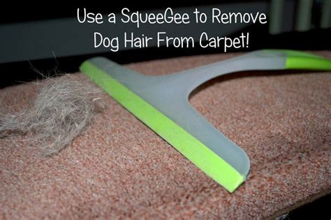 How To Remove Pet Hair From by 1000 Images About Pets On