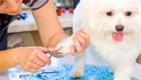grooming at home grooming at home important safety tips and must advice